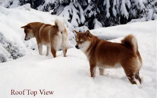 8_photogallery1_2183095700_Rooftopviewedited.jpg