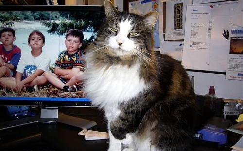 8_photogallery1_240939667_Cupboards004edited.jpg